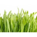 Hierba de cevada» 125 g