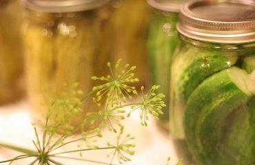 fermentados pickles